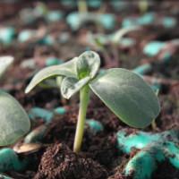Die Bepflanzung des Gewächshauses in den Jahreszeiten