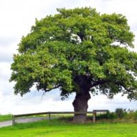 Wie wird ein Baumgutachten vorgenommen?