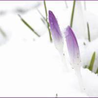 Die richtige Gartenpflege im Winter
