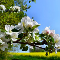 Möglichkeiten für die Entsorgung des Baumschnitts