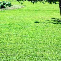 Wann und wie oft den Rasen düngen?