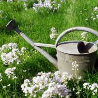 Einen romantischen Rückzugsort mit dem englischen Garten anlegen