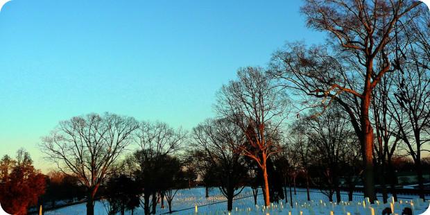 Grabbepflanzung Winter: Blütenpracht trotz Eiseskälte