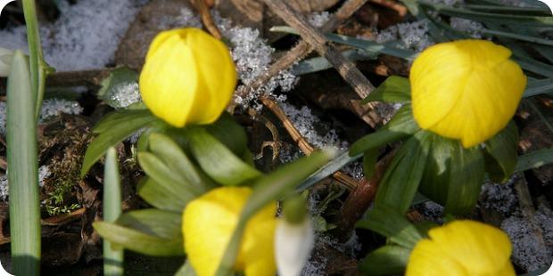 Wie Sie Ihren Garten im Winter pflegen und gestalten können