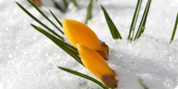 Diese Vorbereitungen müssen Sie treffen, um den Garten im Winter zu schützen