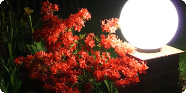 Die richtige Beleuchtung für den Garten planen