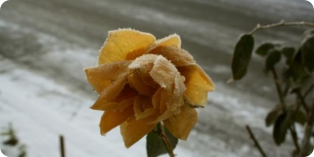 Diese Grabbepflanzungen eignen sich für den Winter