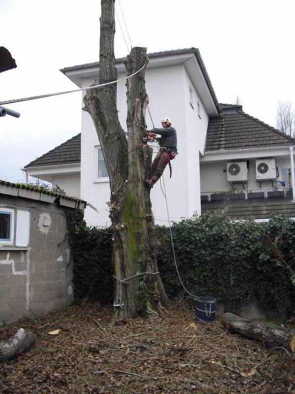 Gartenbau Mannheim jörg goos baumpflege und gartengestaltung in mannheim gartenbau org