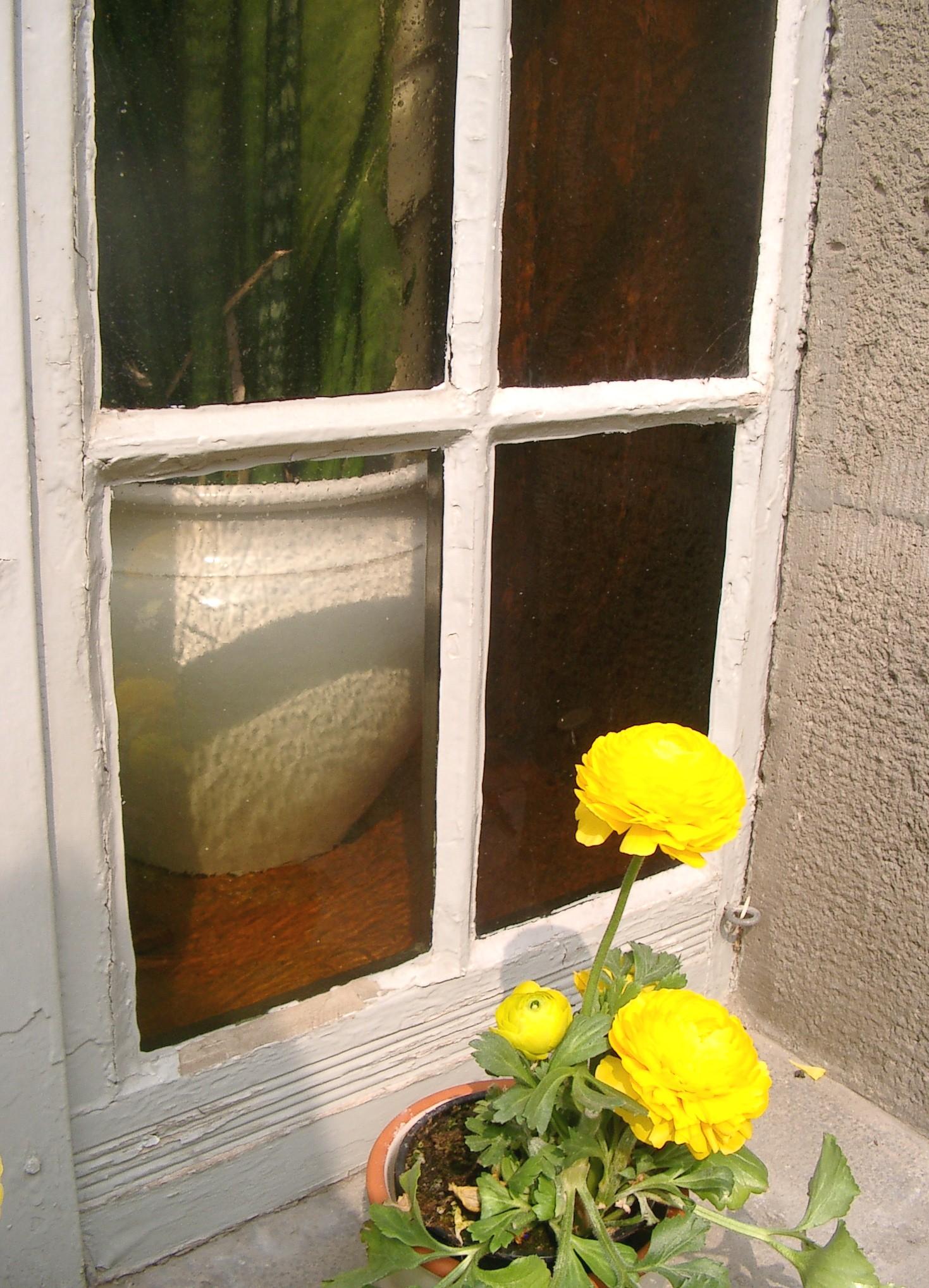 Die richtige Pflege für Holzfenster