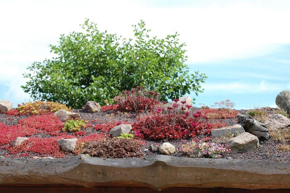 Gartenbau.org | Dachbegrünung Anlegen ? Ein Stück Natur Auf Dem ... Pflanzen Fur Dachbegrunung Dachgarten
