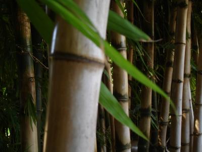 Bambus Terrassendielen Eigenschaften Kosten