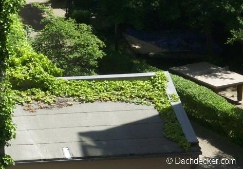 Dachpappe kaufen