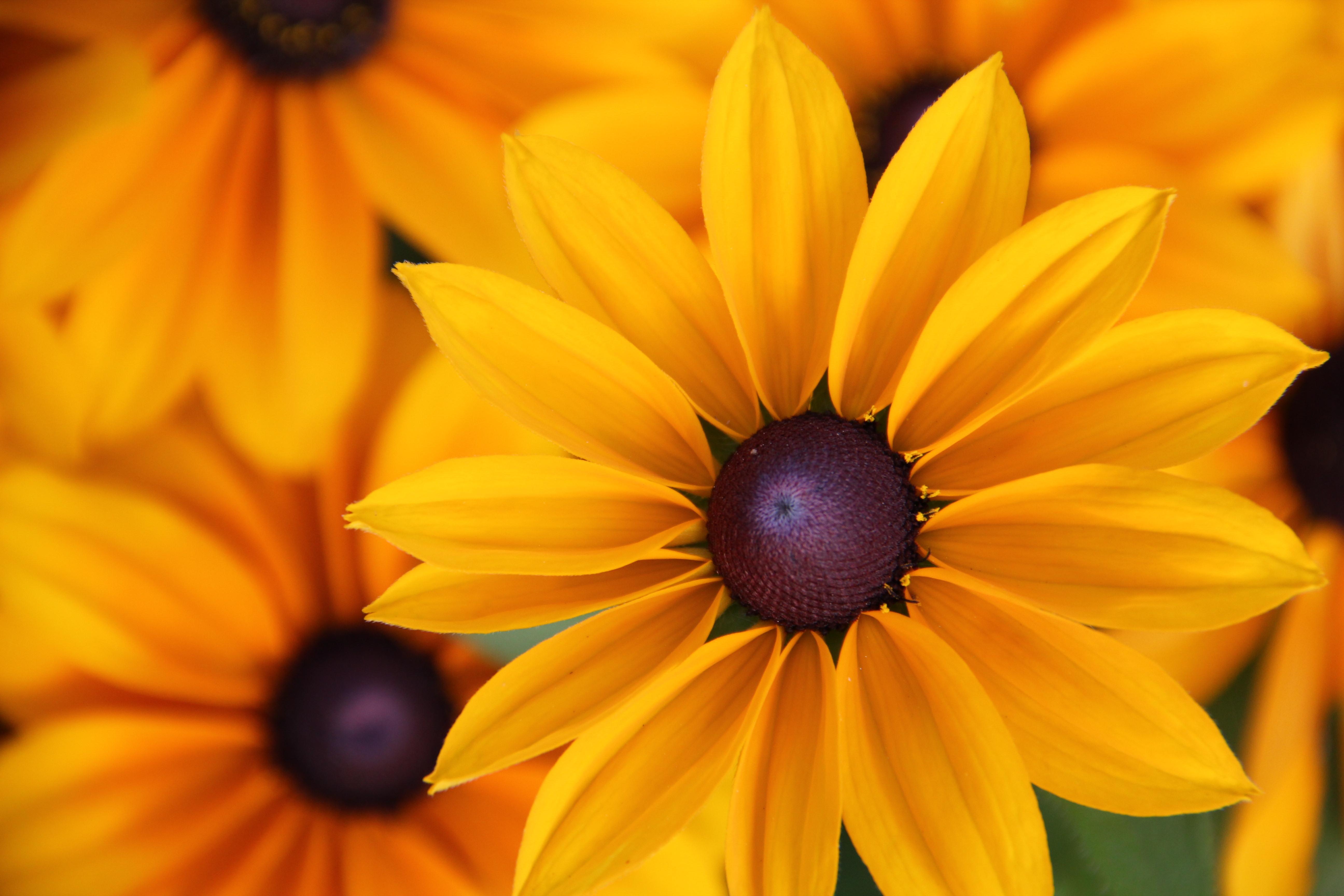 Mit einem pflegeleichten Garten Zeit und Arbeit sparen