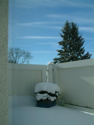 wie winterfeste balkonpflanzen vor frost und trockenheit. Black Bedroom Furniture Sets. Home Design Ideas