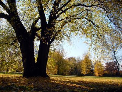 So werden Bäume in Deutschland geschützt