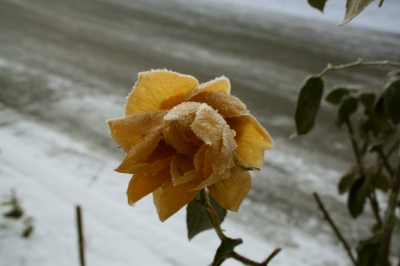 Diese grabbepflanzungen eignen sich f r den winter - Winter gartenbau ...