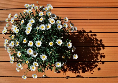Gartenbau.org | Terrassendielen Aus Wpc Und Ihre Vorteile Terrassendielen Aus Larchenholz Vorteile Nachteile