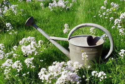 Wodurch Zeichnet Sich Ein Englischer Garten Aus?