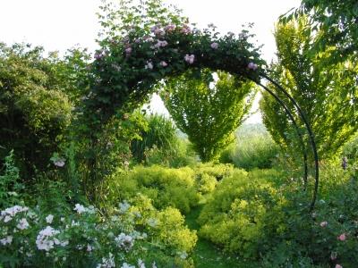 Pflanzung Und Pflege Von Kletterrosen Gartenbau Org