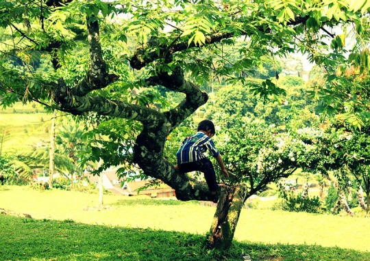 Bespielbarer Garten für die Kinder