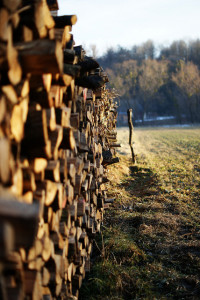 Dieses Bild zeigt einen Holzeinschlag!