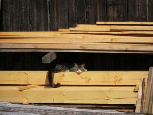 Holz Für Möbelbau Online Auf Schreinereiencom Schreinereiencom