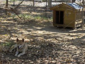 Hundehütten bieten Hunden Schutz vor Wind, Nässe und Kälte.