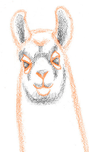 How to Draw a Llama   Arts & Entertainment   Idiots's Guides