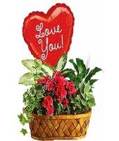 Plants Galore- W-ILY Mylar