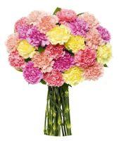 Mixed Carnations