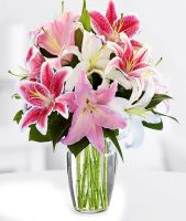 White and Pink Stargazer Lily Arrangement
