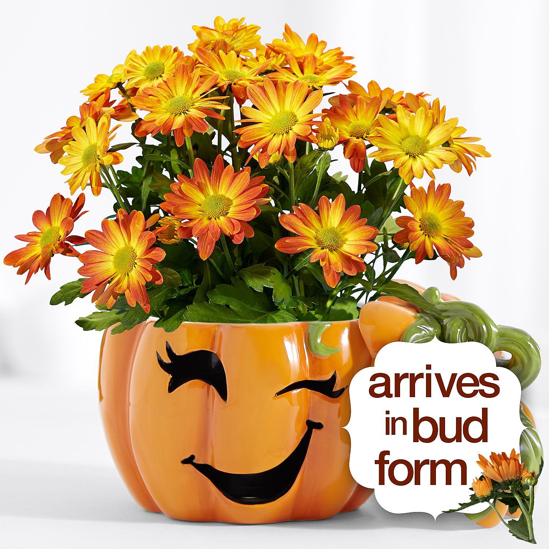 TrickorTreat Halloween Pumpkin