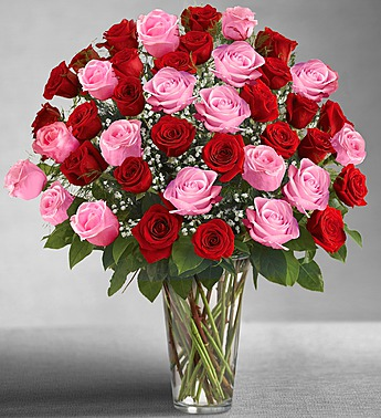 Ultimate Premium Red And Pink Roses