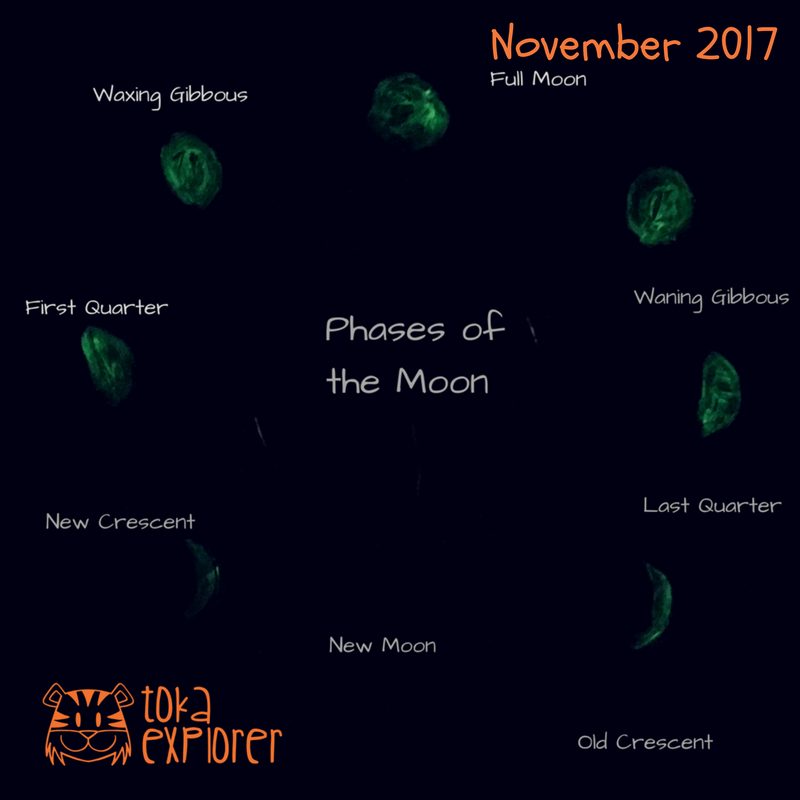 Glow in the Dark Phases of the Moon Activity for Kids