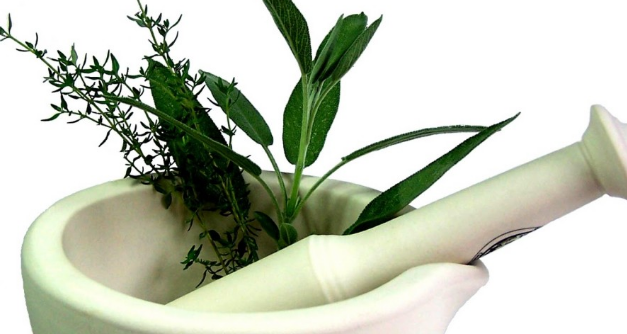 3 Type Efficacious Medicinal Plants Leaves