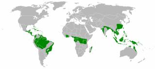 Kode Etik Pecinta Alam