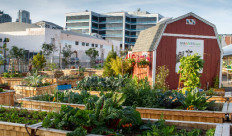 Photo courtesy of Kamino user Downtown San Diego Partnership