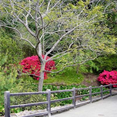 UC Berkeley Botanical Gardens - Walking Tour Stop 1179