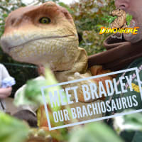 Bradley The Brachiosaurus