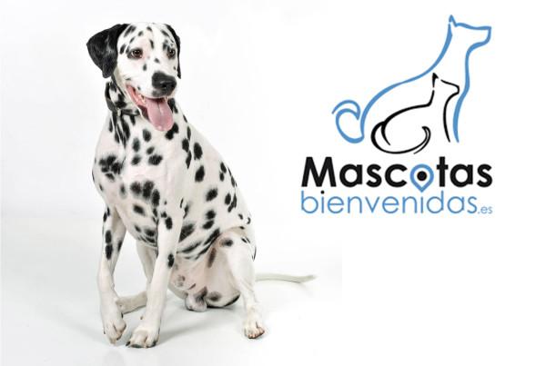 Sesión fotográfica con Mascota en Zaragoza 4