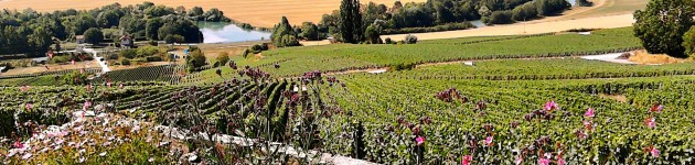View on the Marne and vineyards on our Champagne cruise with hotelship Johanna