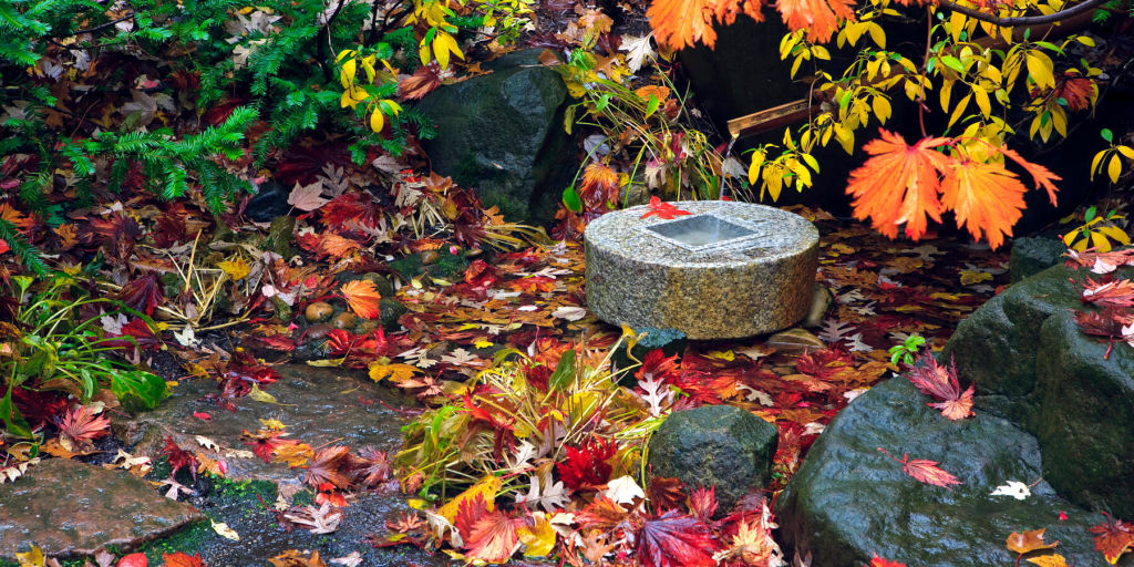 autumn leaves at Anderson Gardens