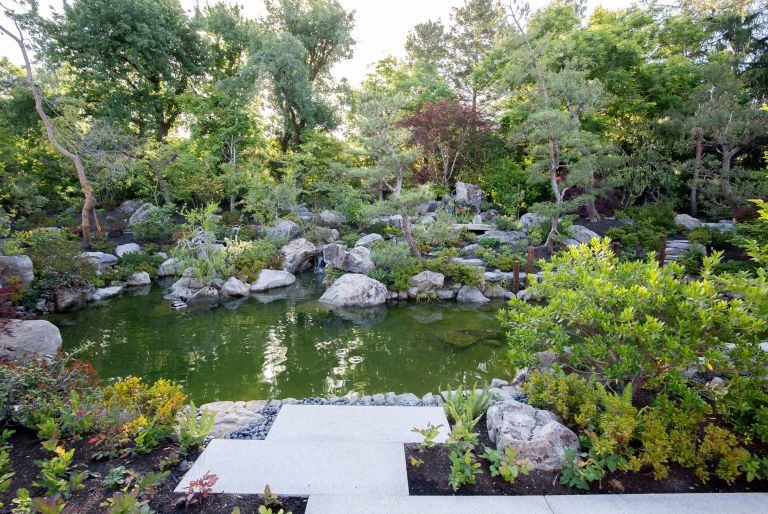pond and trees at Los Altos residence