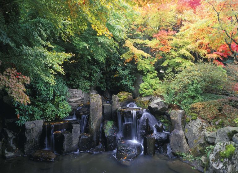 waterfall with autumn trees