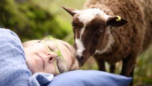 nukkuja, lammas