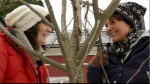 Camilla och Lotta beskär äppelträd på Strömsö