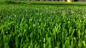 en gräsmatta