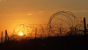 Taggtråd i solnedgång