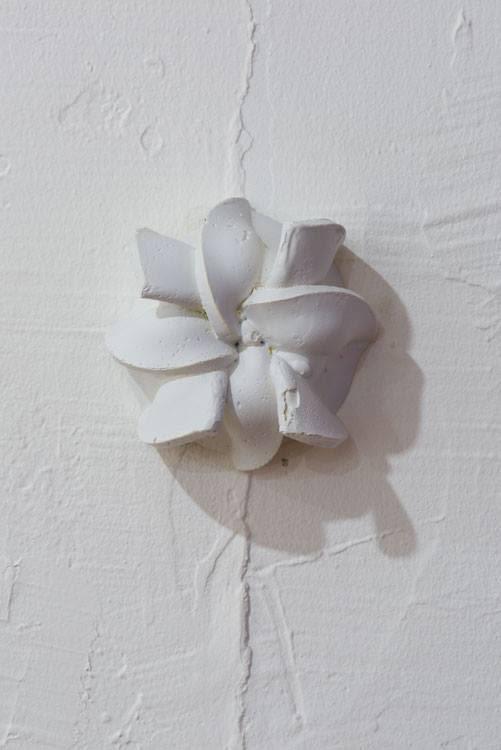 Pinwheel Vaginis