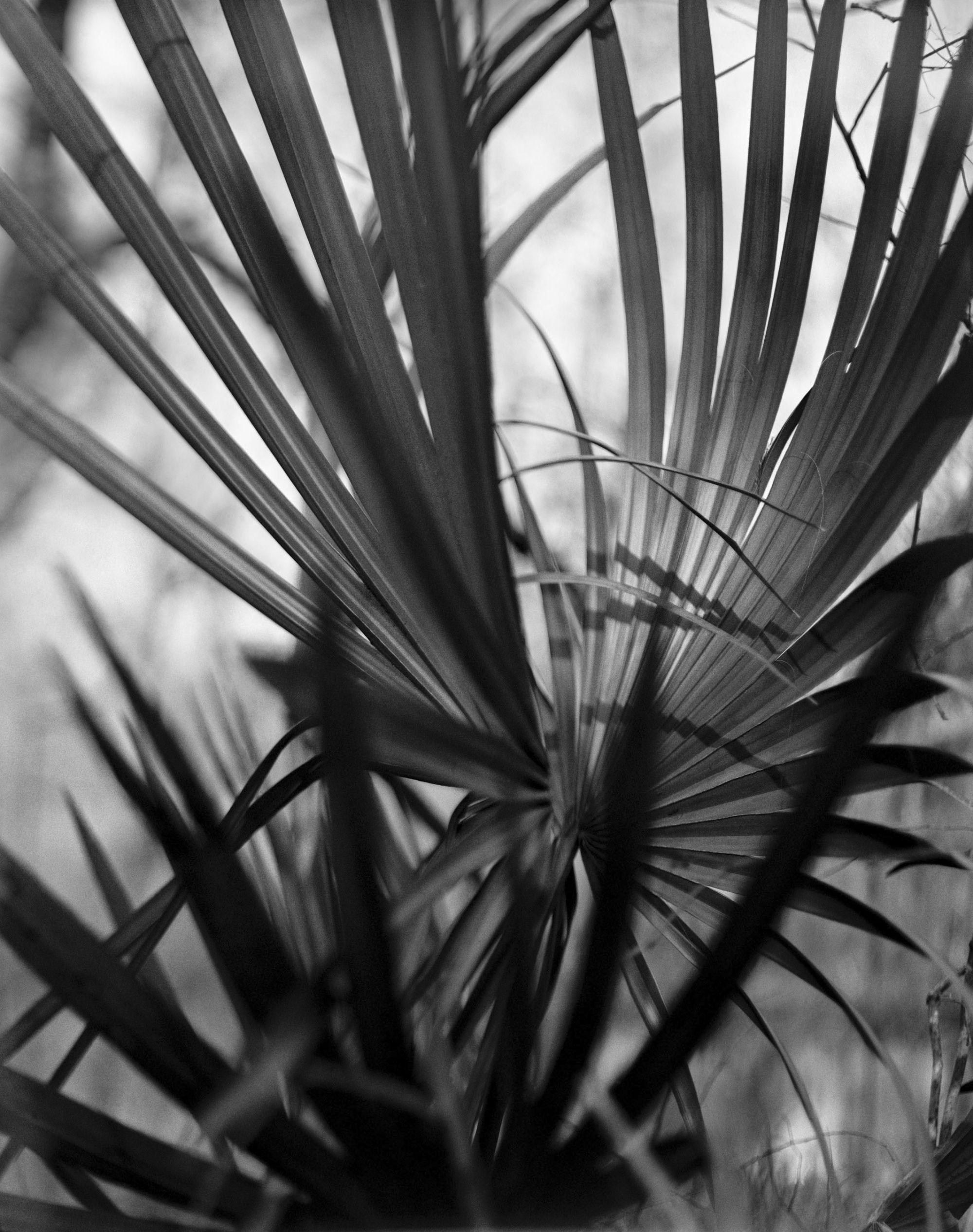 slip touch (palm)